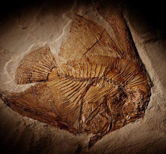 Vini vulcanici e antichi fossili marini